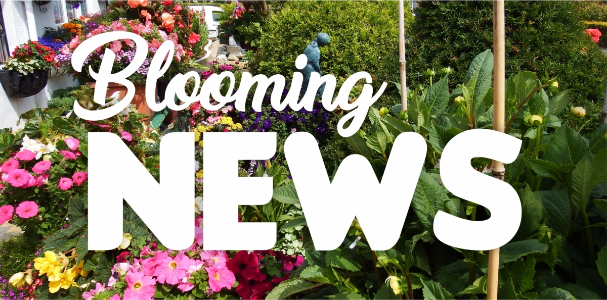 LATEST NEWS about Wight in Bloom – Gardening Competition and Awards 2018